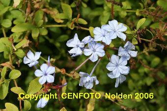 Image Result For Home Garden Koln